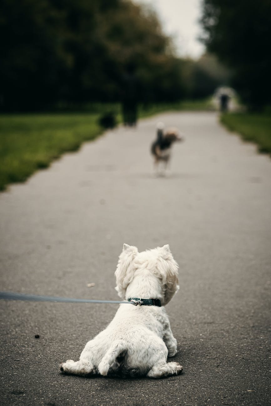 dog with leash on pathway